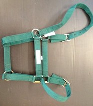 halter headstall web pony